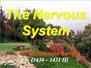 Introduction of anatomy - nervous system