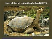Story of Harriet