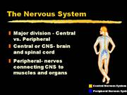 intro into nervous system