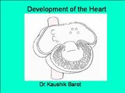embryology of heart